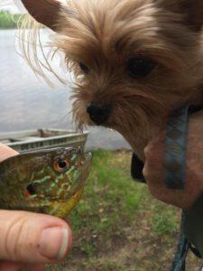 Dog meets fish